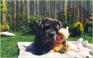 Пёс и смешной карапуз
