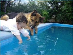 Малыш и овчарка