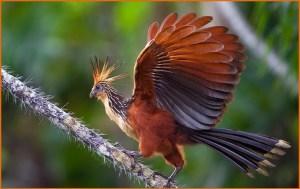 Птица из райских мест