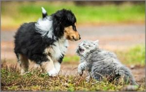 Встретились кошка и собака