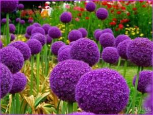 Чудесные цветы на даче