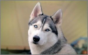 Собака хаки