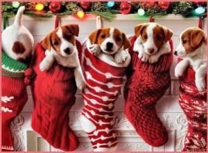 Собаки в подарок