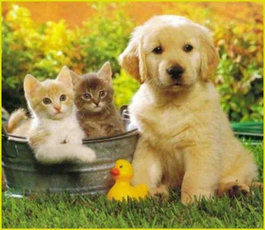 Собака и котята