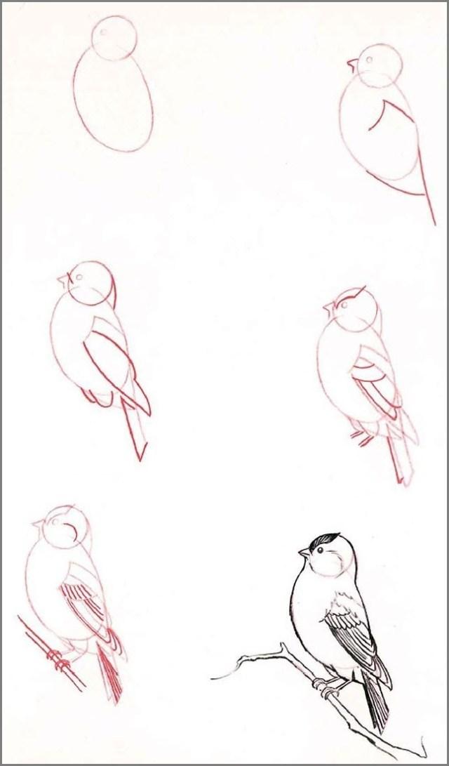 Птицу поэтапно нарисовать