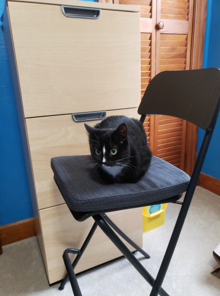 Tonks on her new office chair