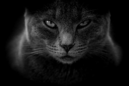 Meme of cat face