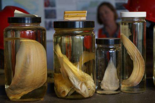 Im Bereich, wo das gereinigte Abwasser in den Pazifik entlassen wird, wird auch die Biologie genau überwacht.