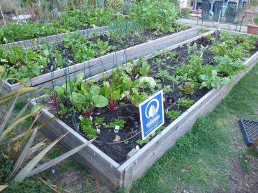 Hier wird liebevoll bewässert: Gemeinscahftsgarten im Problemviertel Tenderloin.