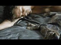 Tomcat (2016) - Kater (2016) - Online sa prevodom
