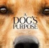 A Dog's Purpose (2017) online sa prevodom