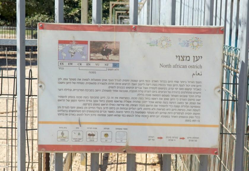 спорт в Израиле (4)