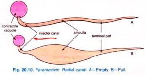 Paramecium caudatum Habitat Structure and locomotion 13