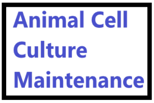 ANIMAL CELL CULTURE MAINTENANCE 1