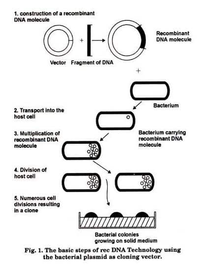 Steps involved DNA technology