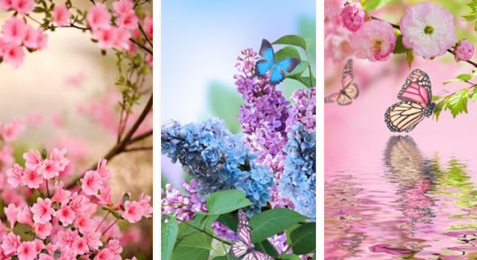 Spring Flowers Download Best Free Live Wallpapers for Android