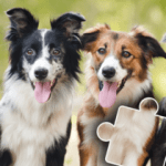 Dogs & Cats Puzzles for kids & toddlers 🐱🐩 🐾 2021.89 APK MOD