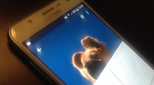 Apps para mascotas