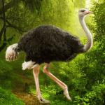 The Ostrich 1.0.4 APK MOD Unlimited Money
