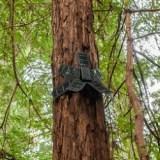 Alte Smartphones werden zu Wächtern des Regenwaldes