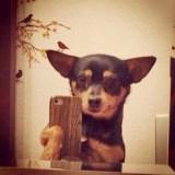 12 tierisch gute Selfie Tipps