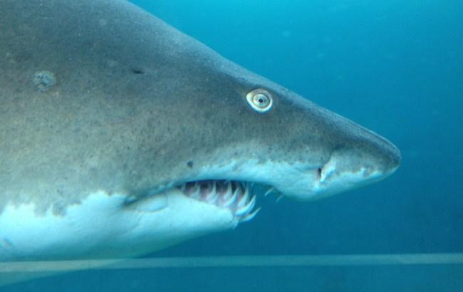 """Im Jahr 2015 sind mindestens 28 Menschen beim Knipsen von Selfies zu Tode gekommen. Angriffe von Haien dagegen haben """"lediglich"""" 8 Menschenleben gefordert. (Foto: Cuthugas)"""