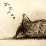 Μην ξυπνήσεις το γατάκι…