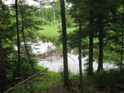 Harris Homestead Preserve Wetland
