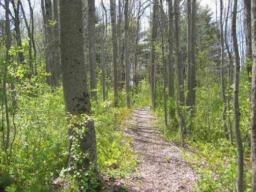 Sherwood Forest, Auburn