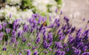 reshma-and-connor-copyright-the-image-garden-photography-6-e1441457581595