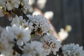 Blossom!
