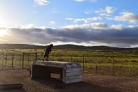 Goat antics, Springbok, SA