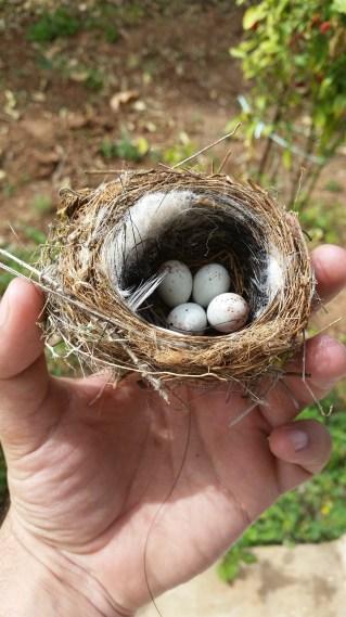 birds nest, found in the backyard