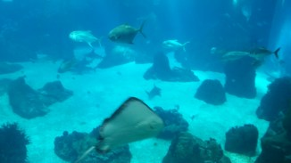 rays! and some rather big fish!
