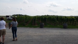 the vines at Honsberger