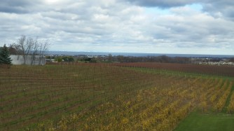 A regular view: vines & lake Ontario!