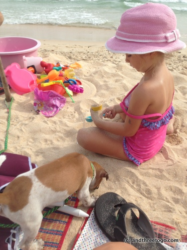 Even cuter... Z and the puppy at the beach... it was Jingles first time at the beach and he loved it!