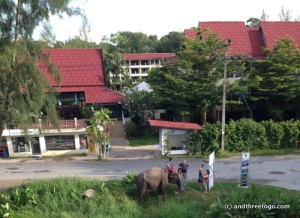 I can't believe I forgot to mention the elephants that lived behind our resort in Khao Lak! This elephant would just walk around with his mahout on his back for a while each day and then him and one other elephant would roam around in the pasture the rest of the time.