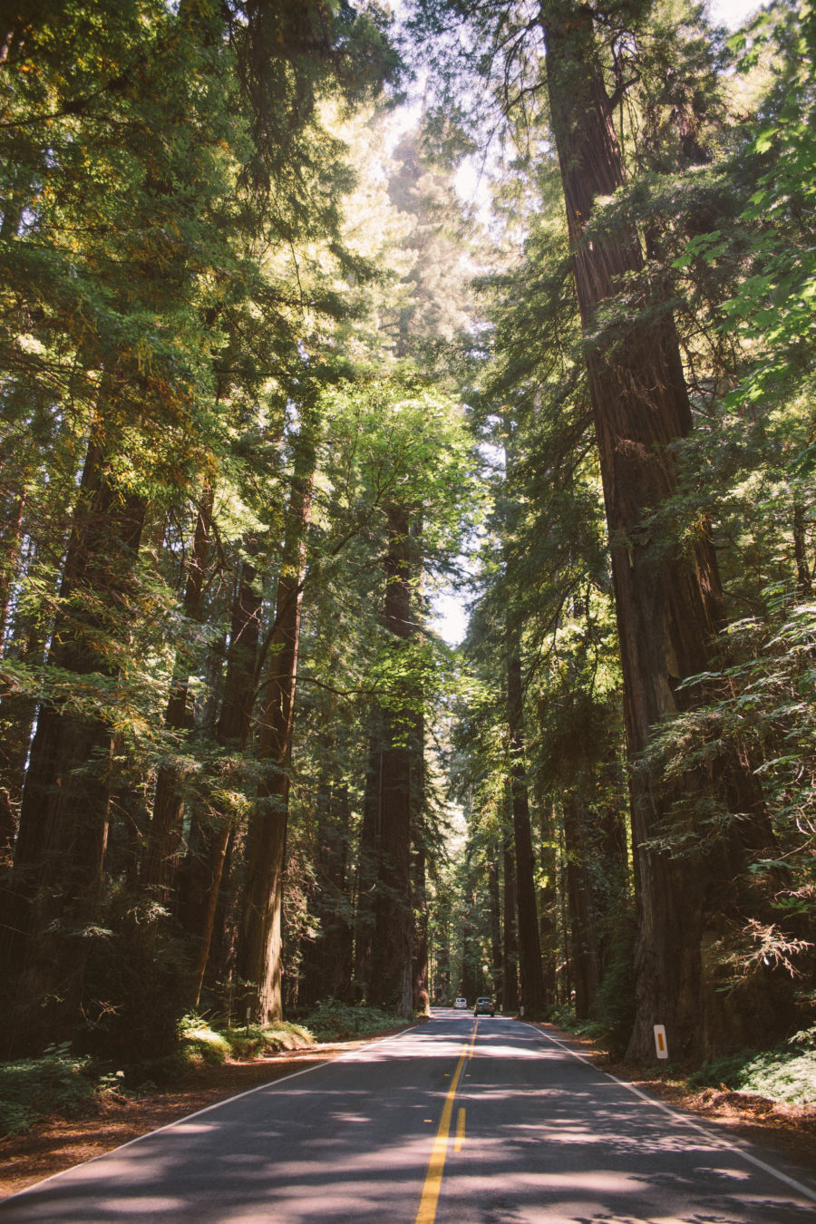 PNW Road Trip Avenue of the Giants California