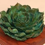 Andy Rader - Bronze - Echeveria spp. 03
