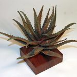 Andy Rader - Bronze - Aloe spinosissima