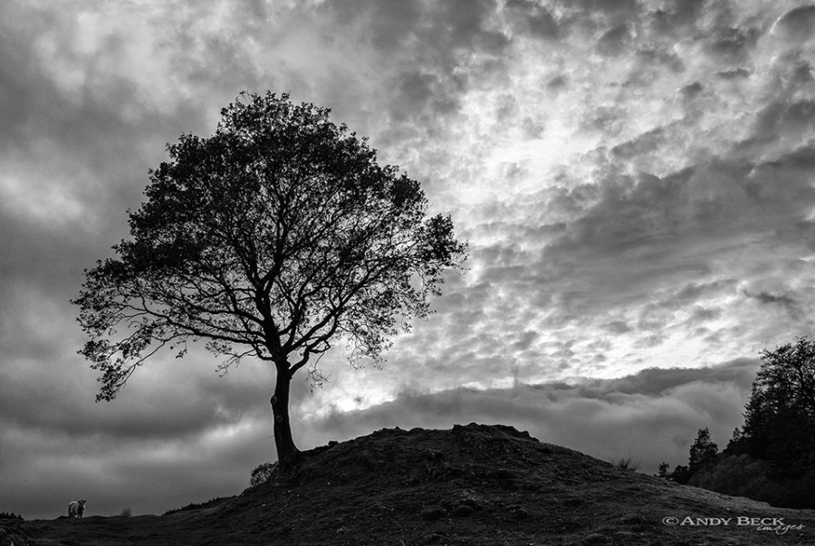 Tree on Cartmel Fell