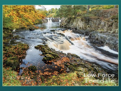 Low Force postcard