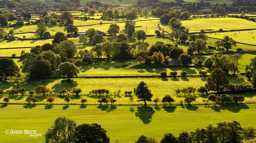 Tree shadows, Teesdale