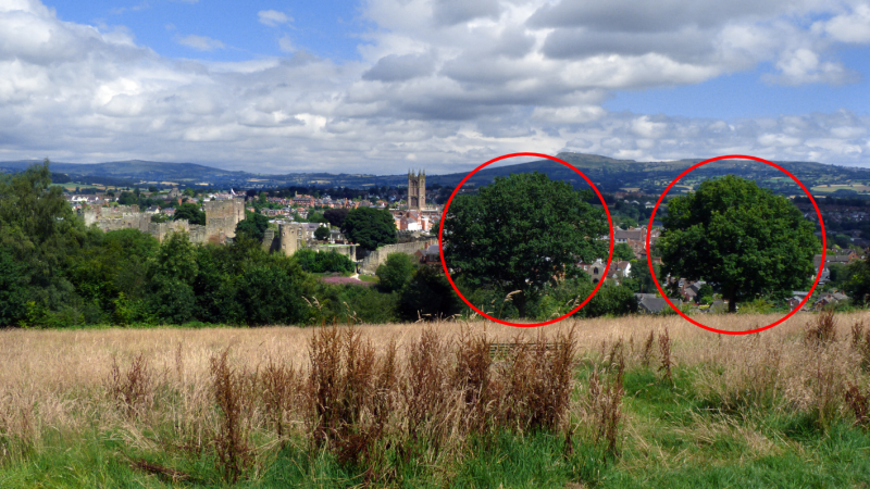 Oak trees on Whitcliffe Common to be felled after Shropshire Council lodges no objection