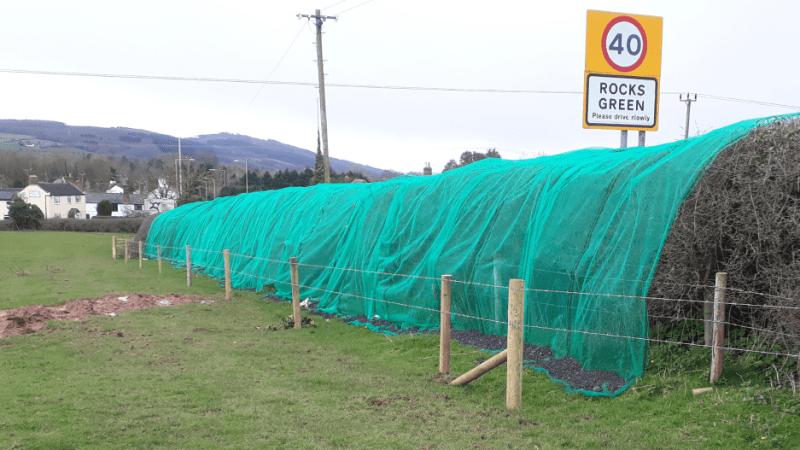 We live in an growing biodiversity desert – Rocks Green developers are making it worse with hedge netting that traps birds (updated)