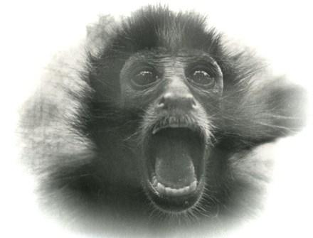 Primate-1960---New-Old-Stock