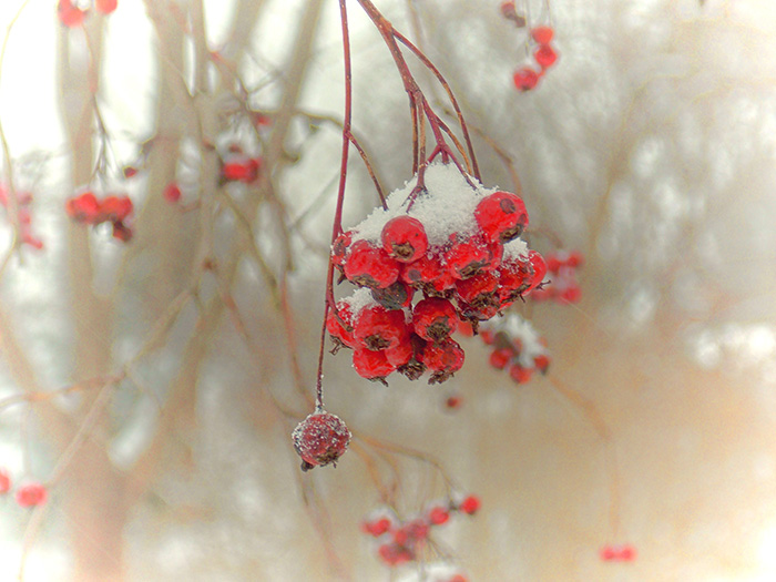 Winterberries-January-Holidays-on-Frugal-Guidance-2