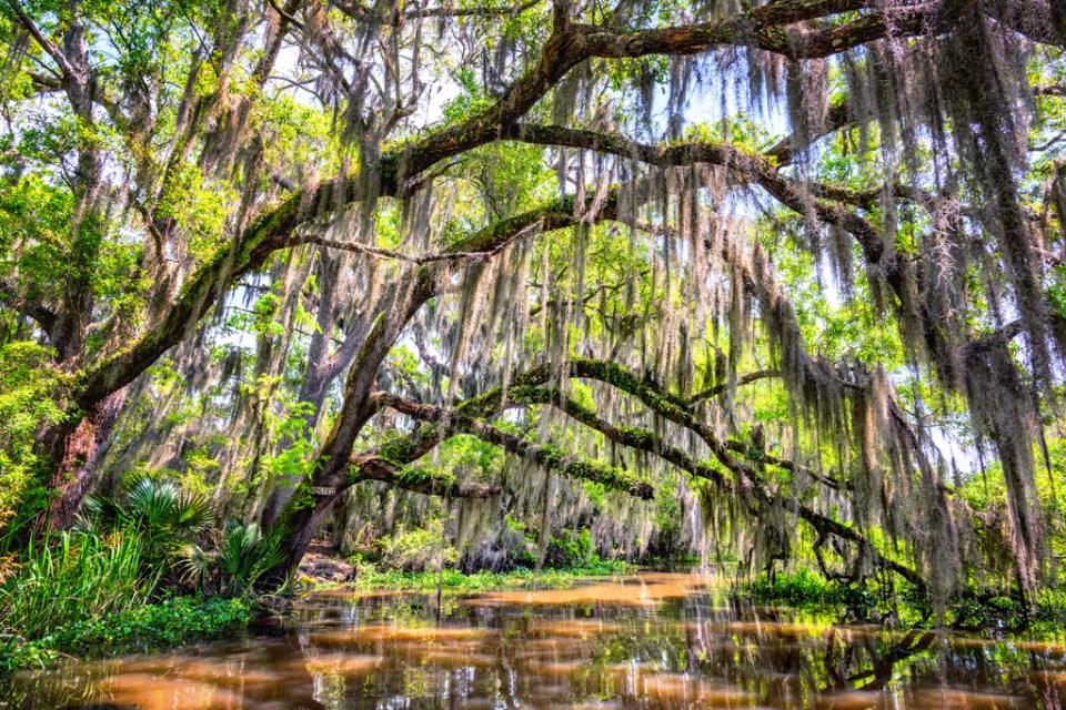 Louisiana bayou swamp photography