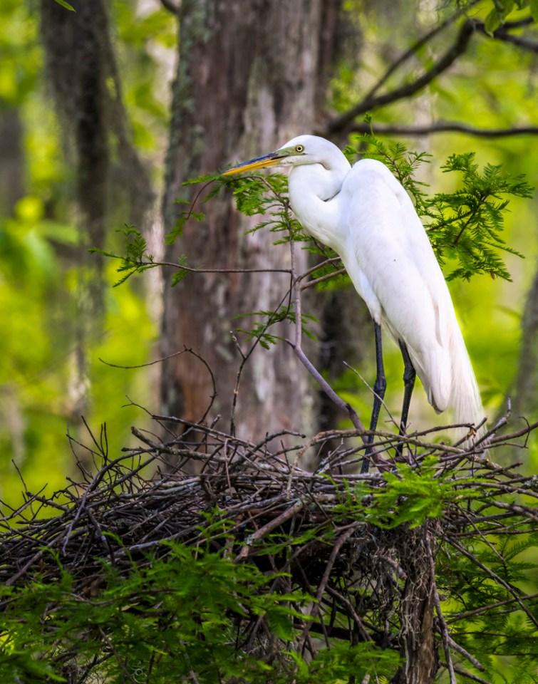 Barataria National Wildlife Refuge photography